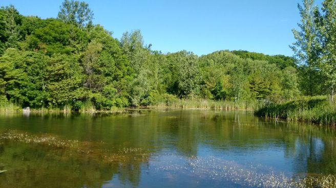 Evergreen Brick Works pond
