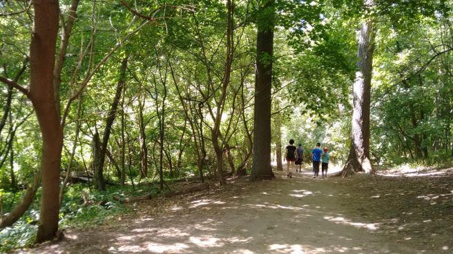 forest_highpark