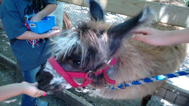 llama_highpark